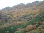箱根旧街道からの紅葉