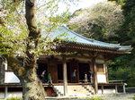 旧燈明寺本堂と桜