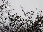 2016.11.01朝の空と桜