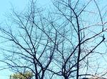 落葉の後の青空