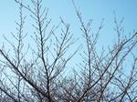 2017.01.07 七草の青い空