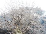 我が町・雪景色