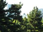 江戸城北方の眺望