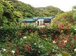 薔薇と鎌倉文学館