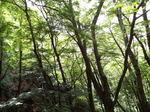 緑の天城峠