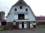 HILLWOOD  HOLSTEINS 牧場