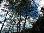 ログハウスの森
