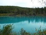 美瑛白金・青い池