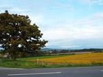 セブンスターの木と農地