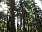 旭川市外国樹種見本林