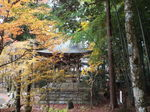 長安寺鐘楼の楓