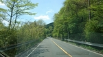 箱根乙女道路の新緑