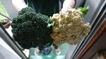 収穫したブロッコリーとカリフラワー