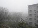 我が町の朝霧