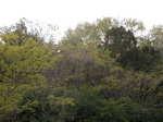 我が埴生の宿の鶯の森