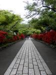 躑躅咲く敷石の参道