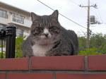 出会った野良猫