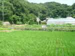 鎌倉の田園