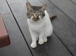 清泉寮の猫?