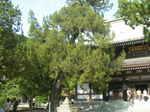 円覚寺・仏殿と
