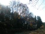 瀬谷市民の森