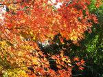 覚園寺境内の紅葉