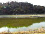 永福寺の池