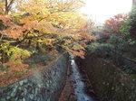 二階堂川の紅葉