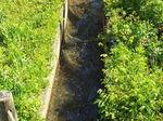 湿性花園用水路