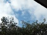 これから台風接近、青空も覗き陽も射す