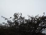 雨雲(乱層雲)