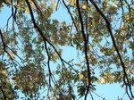 葉が残る広葉樹