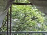 我が庭の緑