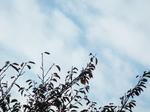 曇り勝ち、僅かの青が悲しい