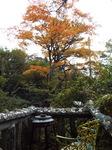 竹やぶ箱根店のテラス席からの黄葉
