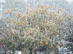 東京では54年振り初雪、我が庭の❄