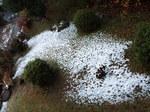 昨日の雪の残りもの