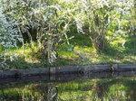 沼にカワセミ(川蝉・翡翠)