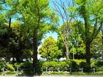 新緑萌える山下公園