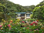 薔薇の鎌倉文学館
