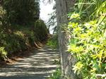 ウグイスが棲む散歩道