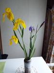 黄菖蒲と檜扇文目の花活け