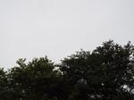 2020.07.15 盂蘭盆会の空