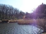 万騎が原大池自然公園の大池と芦原