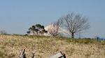 旧米軍深谷通信隊からの富士山