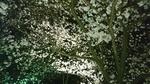 夜桜ライトアップ