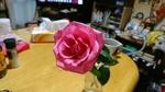 ルビ−婚式祝いの薔薇