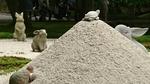 砂利の庭月見台