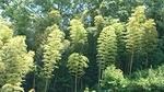 竹林の涼み