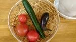 老健・ベランダ菜園・収穫